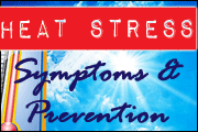 Heat Stress Symptoms and Prevention